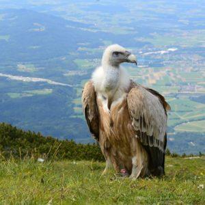 Escapade en Aveyron